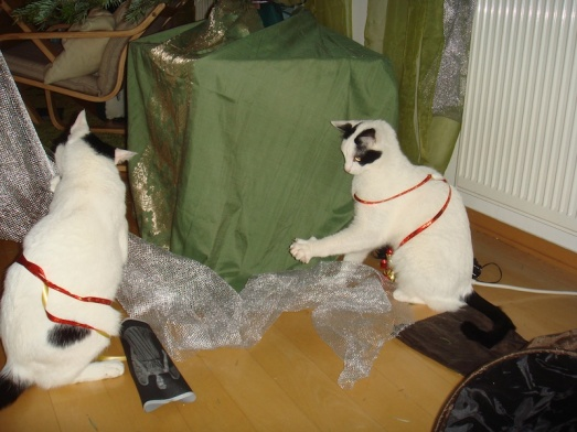 Devil-kitty and Dukie help us take down the Christmas tree. (This is actually from January, but you've seen more pictures of them in December than you thought possible, so January is the new December.)